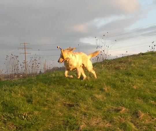 Die Schonsten Bilder Unserer Hunde Hovawart Silas Hovawart Hera Und Hovawart Brian